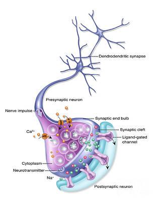 Photograph - Detailed Neuron, Illustration by Gwen Shockey