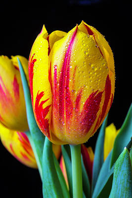 Red Beads Photograph - Dew Covered Tulip by Garry Gay