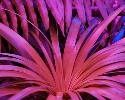 Dew Drop Pink Art Print by Florene Welebny