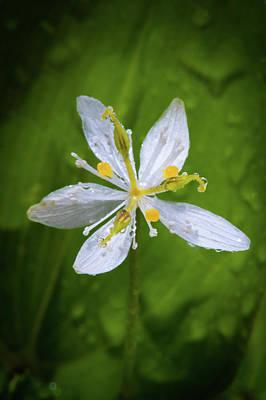 Photograph - Dewy Blossom  by David Heilman