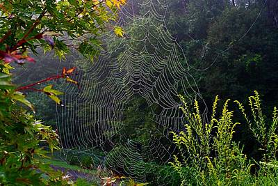 Photograph - Dewy Web by Kathryn Meyer