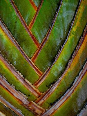 Diagonal Dance Art Print by Donna McLarty