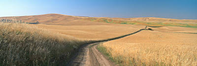 Dirt Road Through Wheat Field, Kamiak Print by Panoramic Images