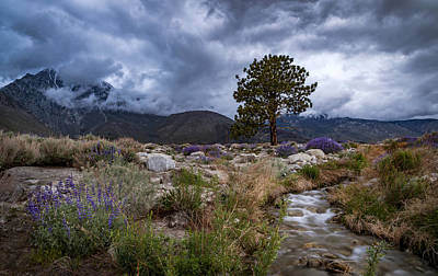 Photograph - Division Creek by Cat Connor