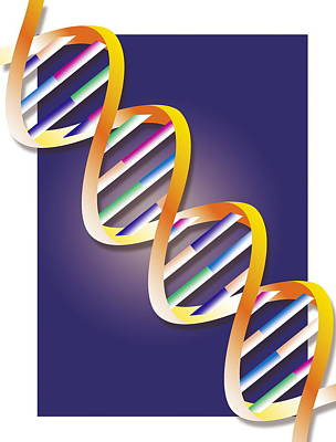 Heredity Photograph - Dna by David Nicholls