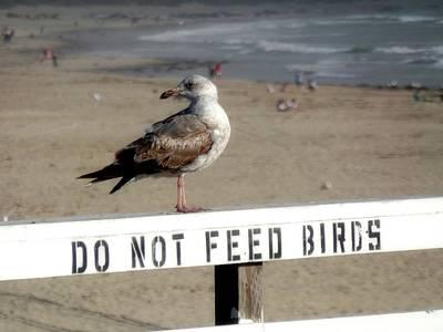 Do Not Feed Birds Art Print