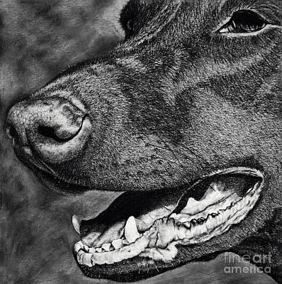 Drawing - Doberman Face by Terri Mills