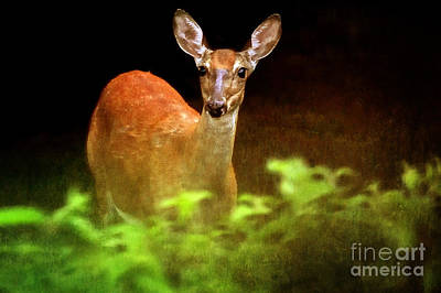 Photograph - Doe Eyes by Lois Bryan