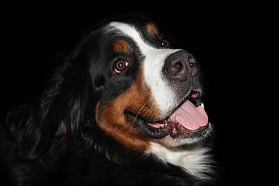Berner Photograph - Dog by Heike Hultsch