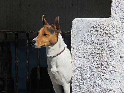 Photograph - Dog In Pampaneira by Chani Demuijlder