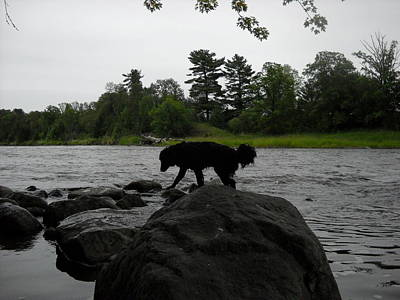 Photograph - Dog On Mississippi River Rocks by Kent Lorentzen