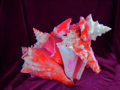 Photograph - Dog Shell by Arlin Jules