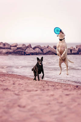 Photograph - Dog With Frisbee by Peter Lakomy