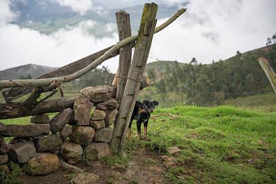 Digital Art - Dogs In Huancas by Carol Ailles