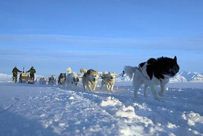Dogsledge, Northern Greenland Art Print