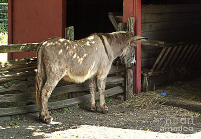 Barnyard Photograph - Donkey In Barn by Blink Images
