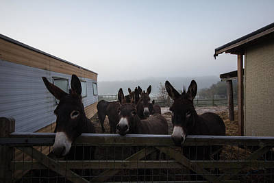 Donkey Photograph - Donkeys by Dawn OConnor