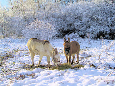Photograph - Donkeys In Wonderland by Valerie Kirkwood
