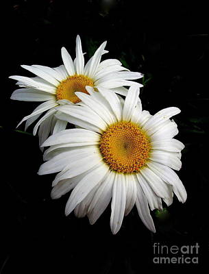 Photograph - Double Daisy by Marcia Lee Jones