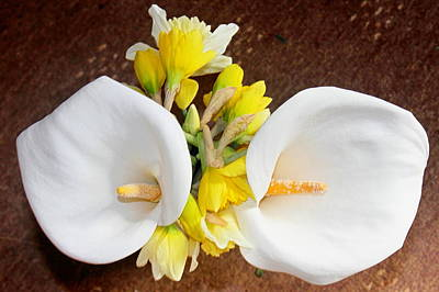 Dafs Photograph - Double Delight by Kevin F Cook