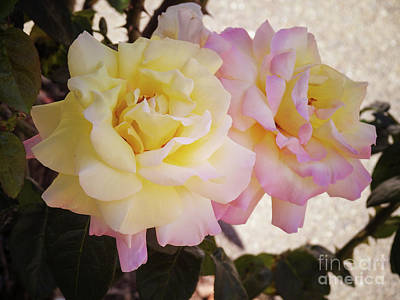 Photograph - Double Delight by Leslie Hunziker