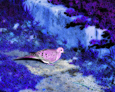 Photograph - Dove  #9225_2 by Barbara Tristan