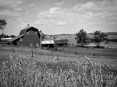 Photograph - Down On The Farm by Jenness Asby