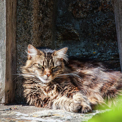 Photograph - Dozing In The Sun by Geoff Smith