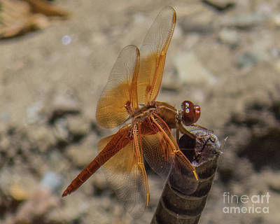 Photograph - Dragonfly 18 by Christy Garavetto