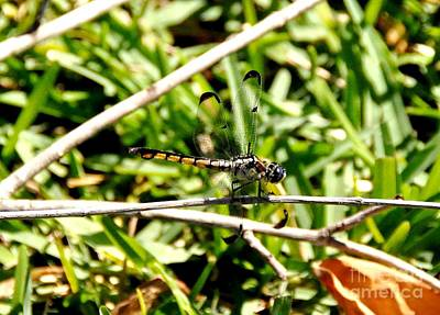 Photograph - Dragonfly by John Black