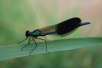 Digital Art - Dragonfly by Julian Perry