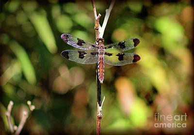 Photograph - Dragonfly by Karen Adams