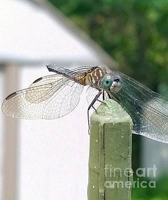 Photograph - Dragonfly Love by Eunice Miller