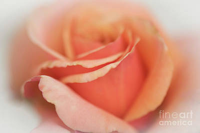 Photograph - Dreamy by Judy Wolinsky