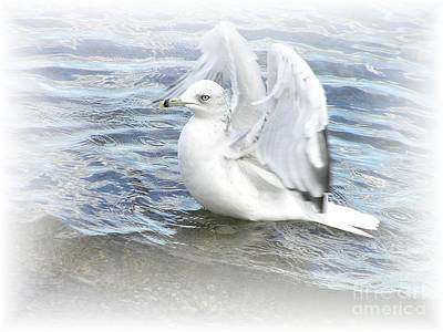 Photograph - Dreamy Seagull by Susan Dimitrakopoulos