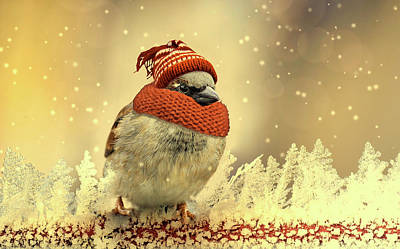 Photograph - Dressed For Winter by Pixabay