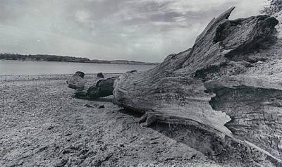 Driftwood Photograph - Driftwood by Martin Newman