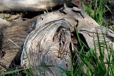 Photograph - Driftwood  by Trent Mallett