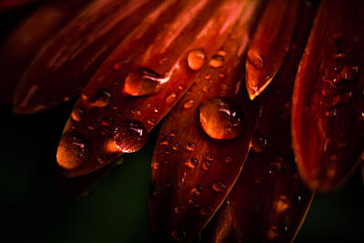 Photograph - Drops by Peter Scott