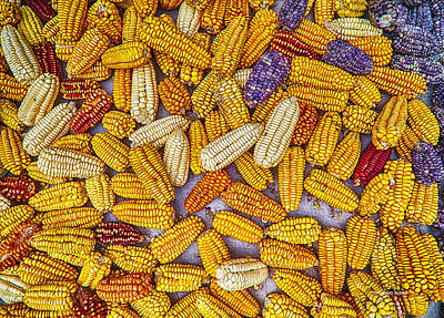 Photograph - Drying Corn by R Thomas Berner