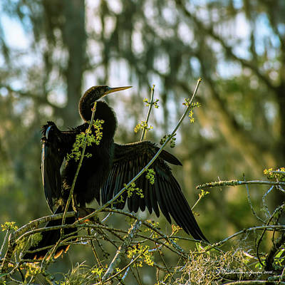 Black Birds Photograph - Drying Time by Marvin Spates