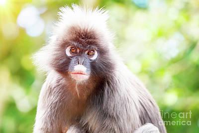Photograph - Dusky Leaf Monkey by Anna Om
