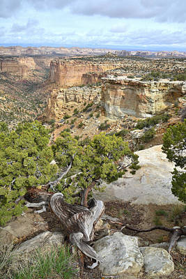 Photograph - Eagle Canyon by Ray Mathis