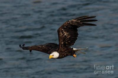 Photograph - Eagle Eye by Mike Dawson