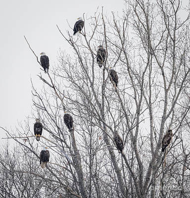 Photograph - Eagle Gang by Ricky L Jones