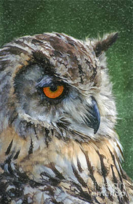 Digital Art - Eagle Owl Bubo Bubo by Liz Leyden