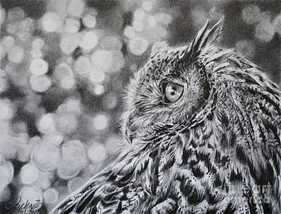 Drawing - Eagle Owl  by Lachri