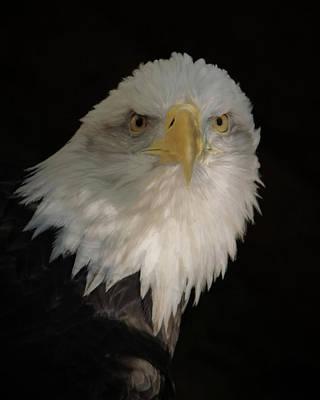Digital Art - Eagle Stare by Ernie Echols