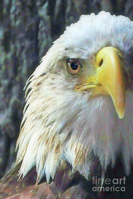 Photograph - Eagle by Susan Cliett