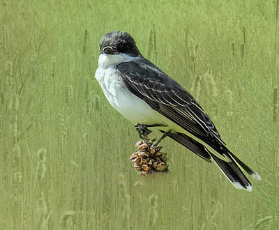 Digital Art - Eastern Kingbird Perching On Thistle. by Rusty R Smith
